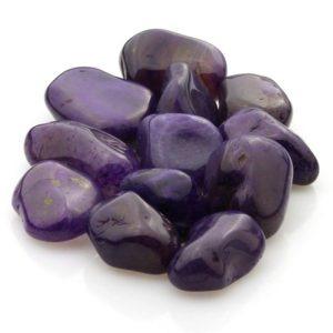 Elágata púrpura